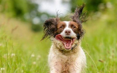 How To: Dog action photography