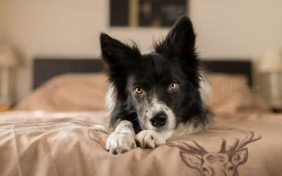 How To: Indoor Dog Photography with Natural Light