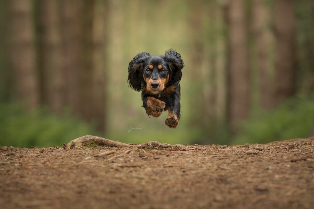 photographing dogs running