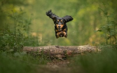 How To: Photograph Dogs Running – Action Photography 101