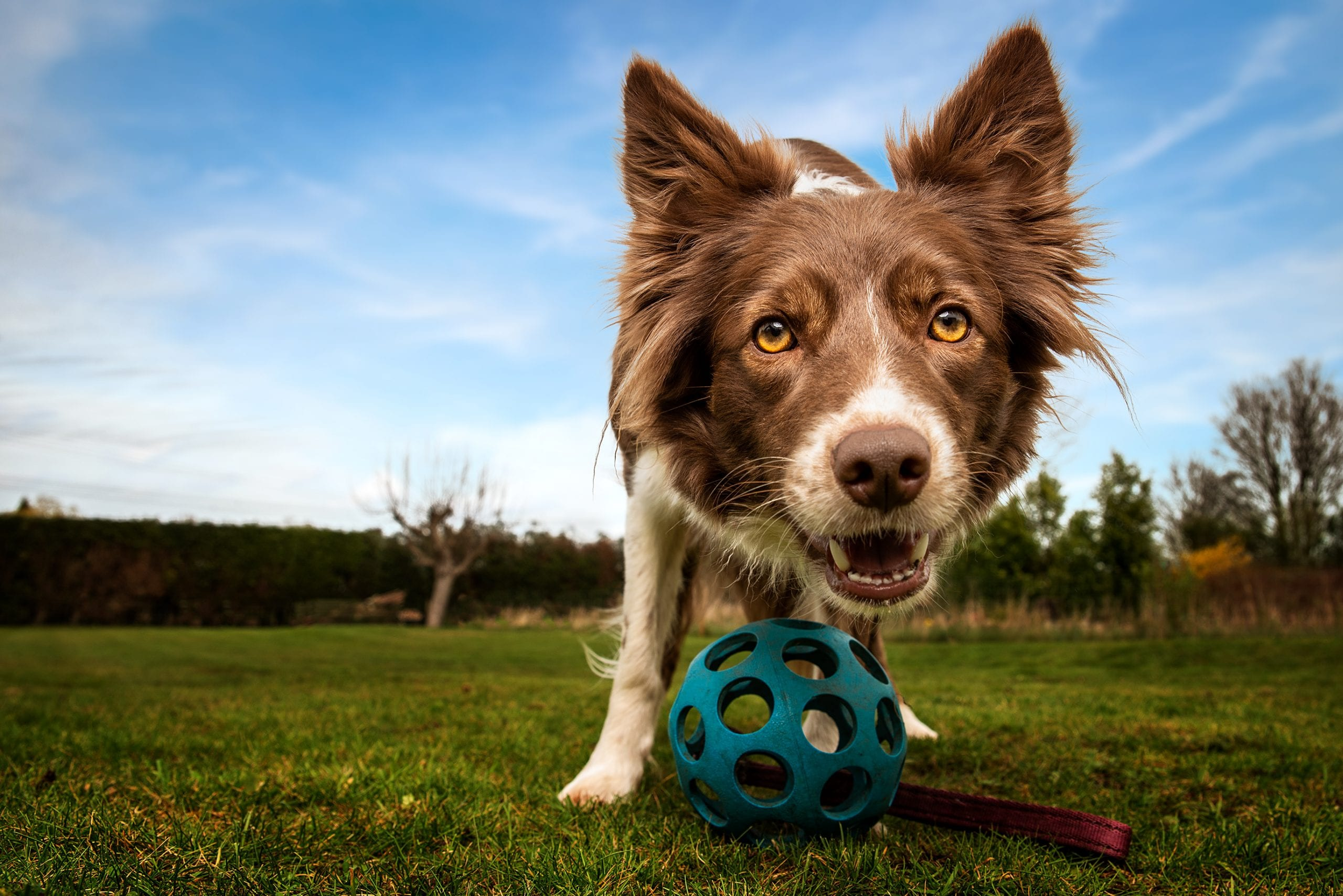 dog photography tuition that dog spot
