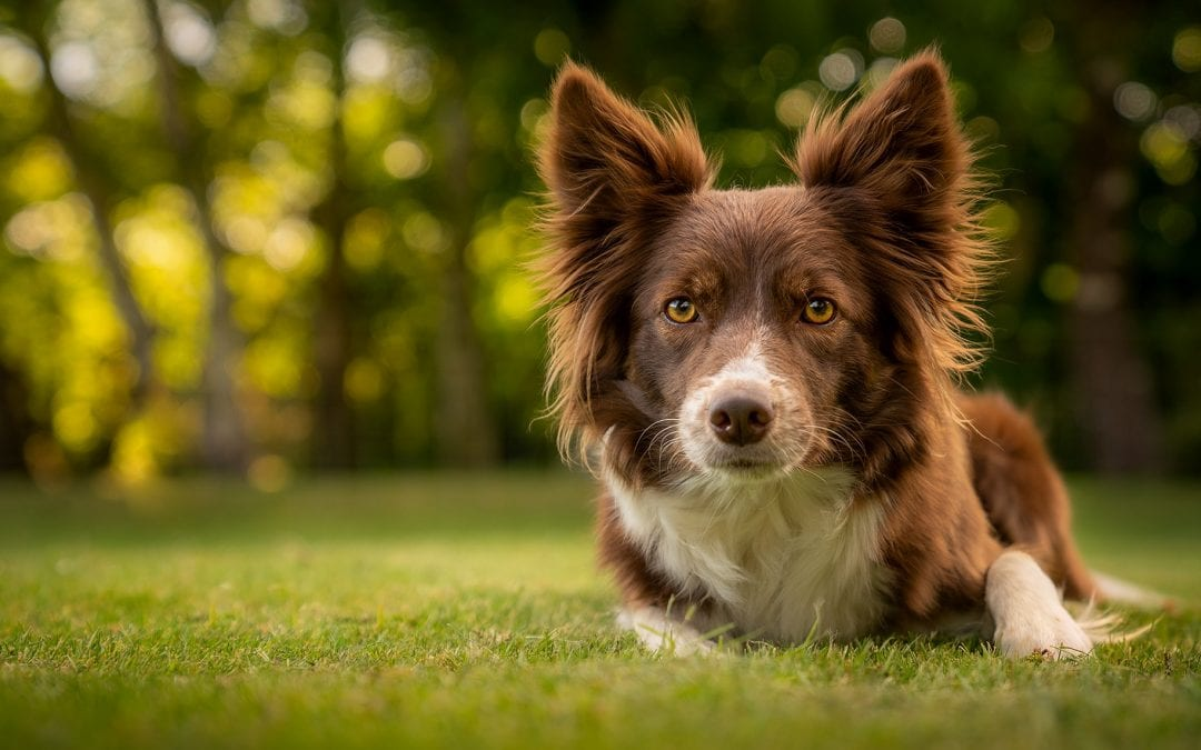 how to outdoor dog photography portrait