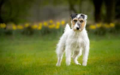 Editing Basics – The Terrier Edit Series