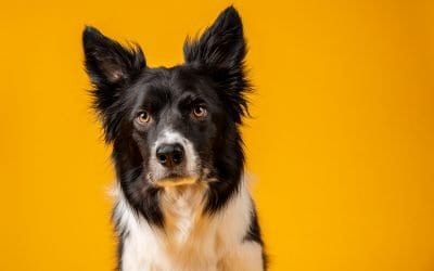 How To: Set up a dog photography studio in a small space