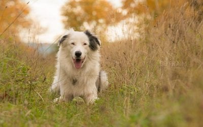 How To: Photograph a White Dog