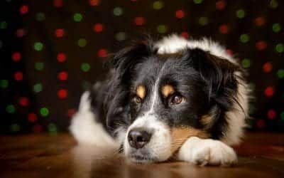 How To: Photograph Dogs with Fairy Lights