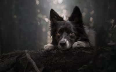 The A-List of Pet Photography Styles
