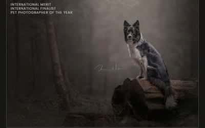 Pet Photographer of the Year 2020
