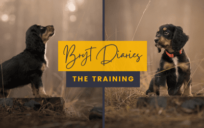 Bryt Diaries – The training of a dog model.
