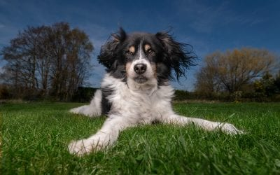 "How to do ""Big Sky"" dog photography"
