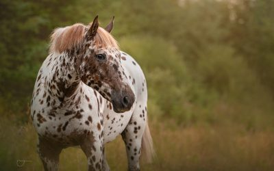 Equine photography behind the scenes (& MTog full edit)